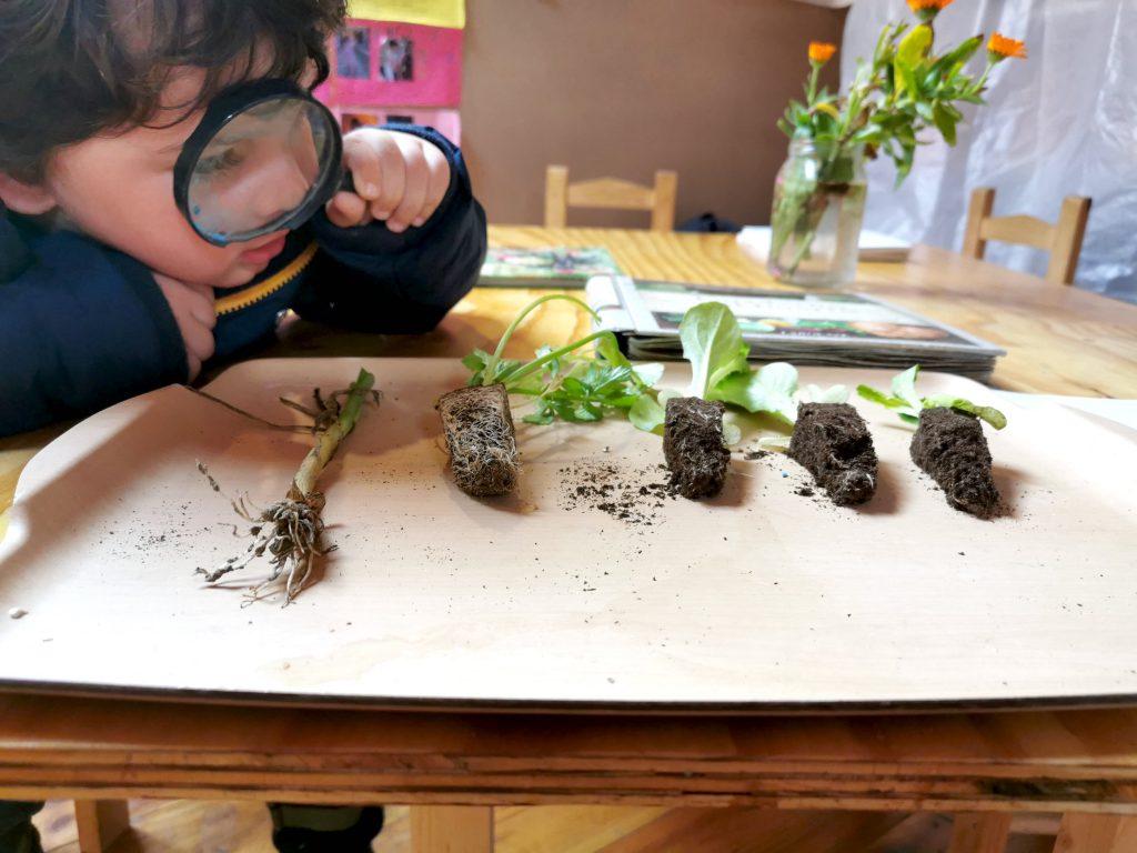 experimentos para niños cercanos a la naturaleza